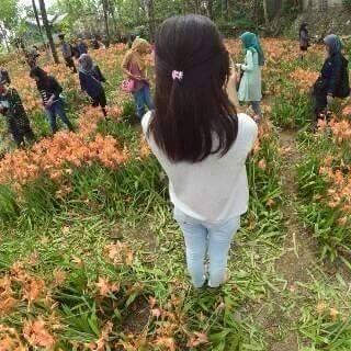 Flower garden amarilis trampled by visitors