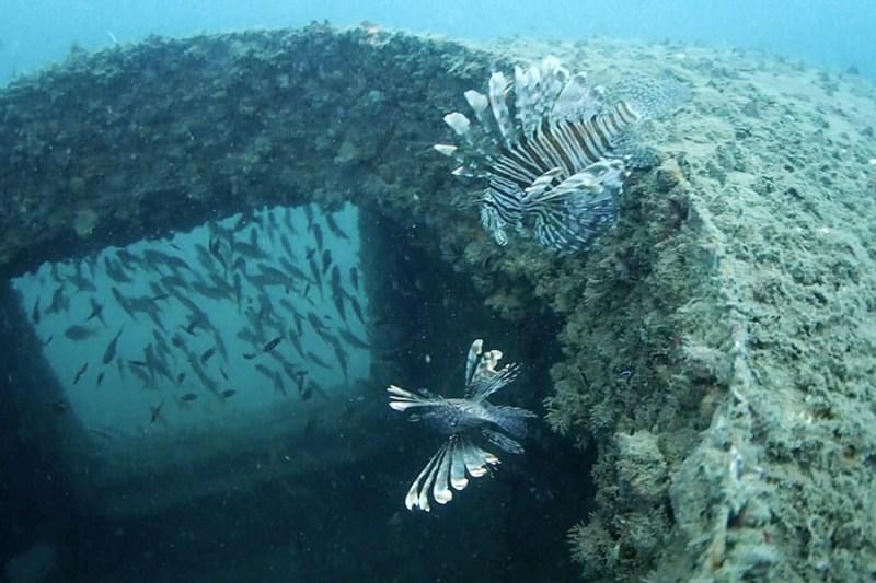 Disini juga bisa diving dan menemui pemandangan seperti ini