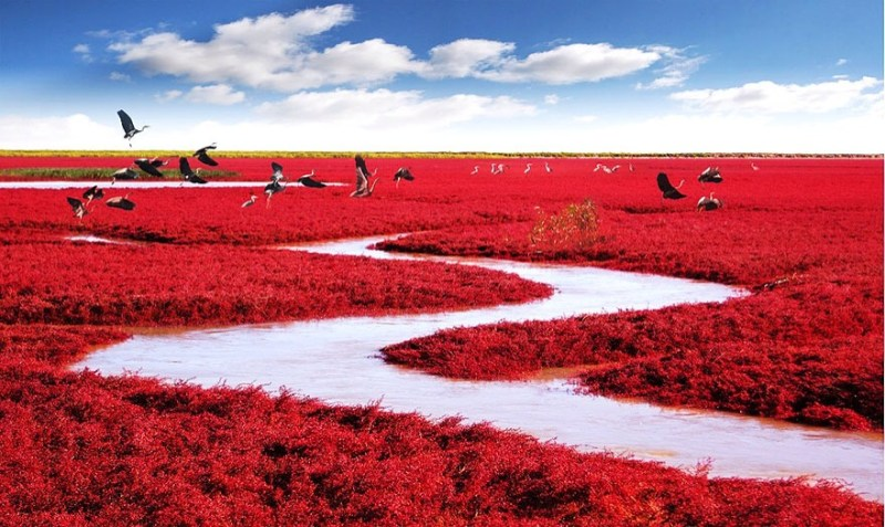 Red Beach, Uniknya Pantai Berwarna Merah Di China