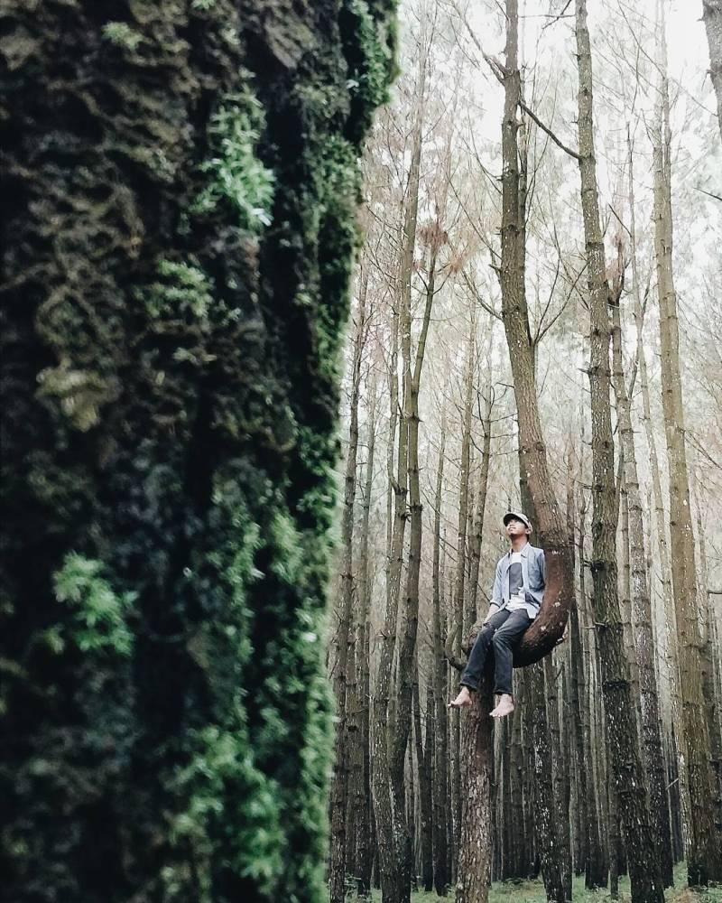 Hutan Pinus Kayon, Desa Batur, Kec Getasan, Kab Semarang by IG @akbarbinrasyid