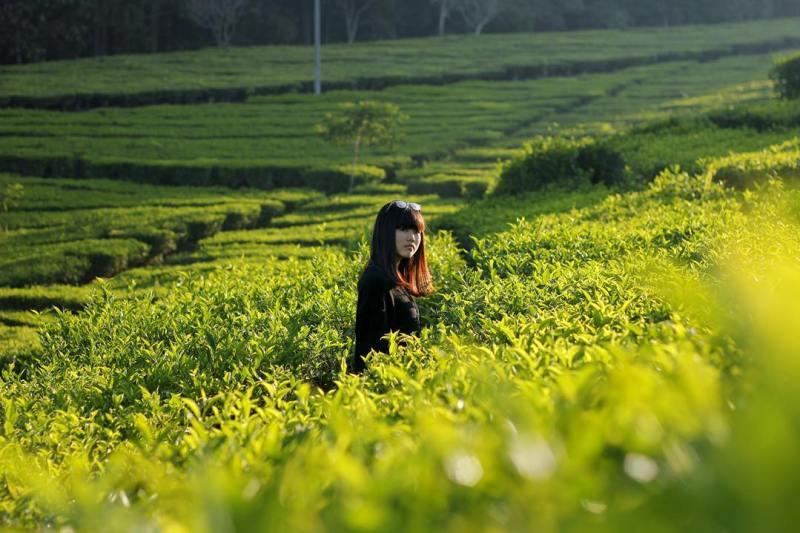 Kebun Teh, Lembang by @septivischadewi