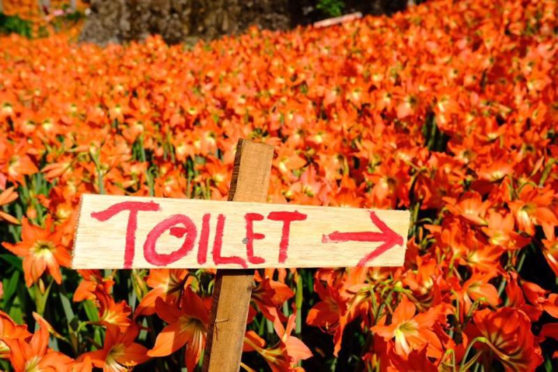 Sudah ada fasilitas toilet di taman bunga ini