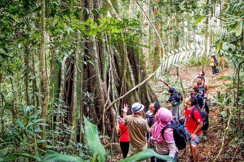 fashion forest - hutan dengan pepohonan jaman old