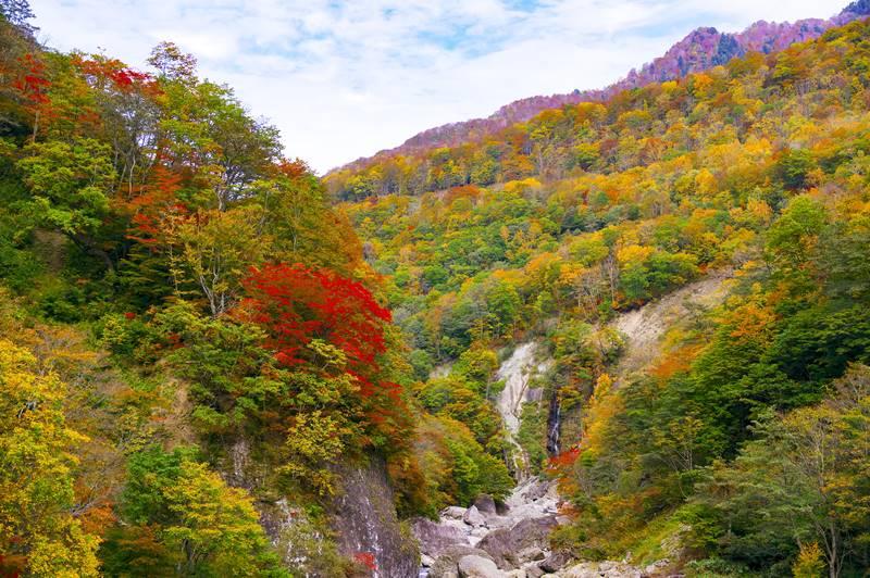 Selama autumn di Jepang, daun akan berwarna kemerahan seperti ini
