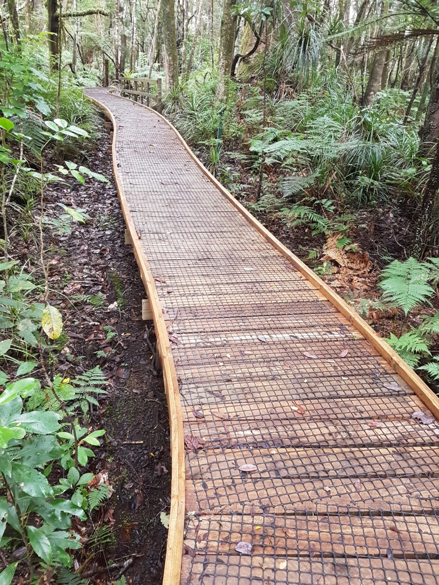 Brand new boardwalks to help stop Kauri dieback in the Trounson forest