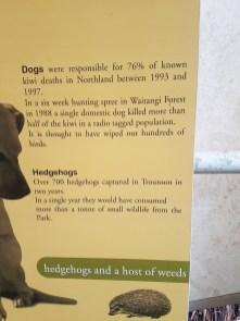 Dogs kill kiwi