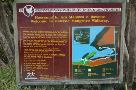 The mangrove walk