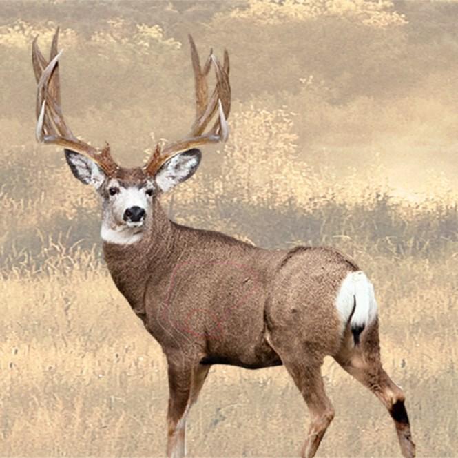 Mule Deer Archery Target The Best Deer 2018