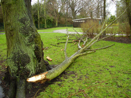 The damaged tree in Beacon Park