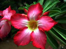 Flower. Pic: Suchitra Prints