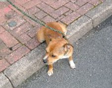 The dog found in Burntwood on August 27