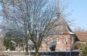 The trees in Fradley before they were chopped down