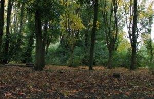 Beacon Park's woodland