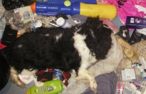 The body of the dog found in the bathroom of a Lichfield property