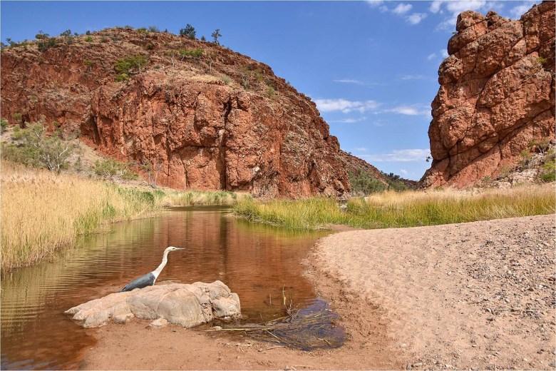 On the Larapinta Trail in central Australia - David Keith Jones