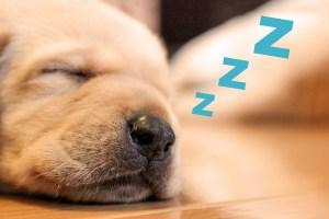 眠る犬の写真