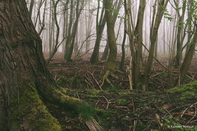 Im Wald (5 von 5)