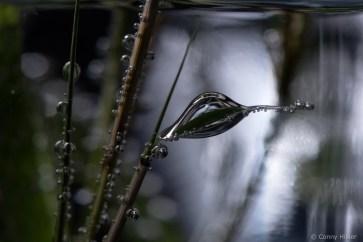 Dicker Tropfen am Bambus im Sprudelwasser