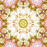 chakra-685024_640
