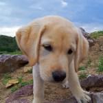 dog-961150_1280