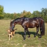 horse-1704969_1920