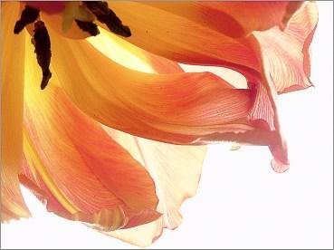 Blütentraum - Remy Reinhold