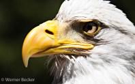 Adler-Portrait