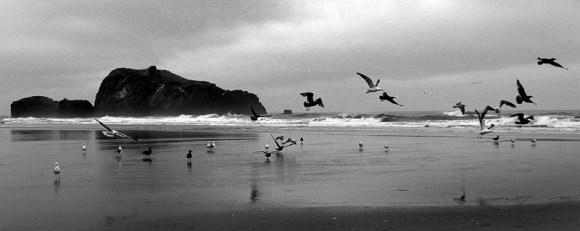 Gottfried Catania - Cannon Beach Oregon 2