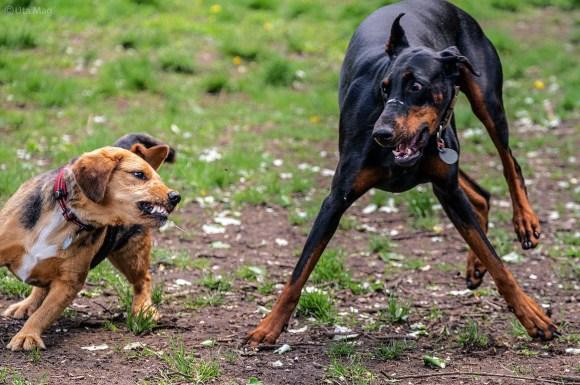 Hundegespräch