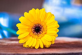 Bloemlezing gele bloem
