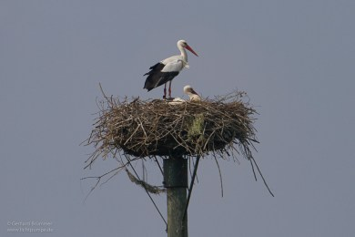 2014_Storch_02