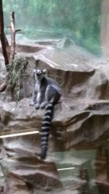 Zoo 20 augustus 2016 (12)