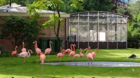 Zoo 20 augustus 2016 (6)