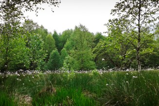 Schwarzes Moor in der Rhön