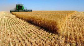 USDA: прогноз мирового производства пшеницы в 2016/17 МГ понижен
