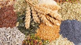 Аграрии обеспечены семенами для весенне-полевых работ на 97%