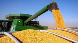 ЕС в 2017/18 МГ увеличит производство кукурузы на 10%