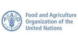ФАО объединяет усилия с властями Молдовы в борьбе с африканской чумой свиней