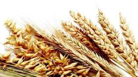 Украинские аграрии уже экспортировали 1,4 млн тонн зерновых