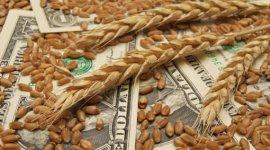 """Рынок зерна: неплохой урожай и """"плохие"""" цены"""