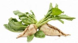 Водоудерживающая способность растений сахарной свеклы, обработанных баковыми смесями гербицидов