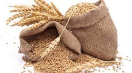 Новый сельскохозяйственный сезон может принести России рекорды урожая и экспорта зерна
