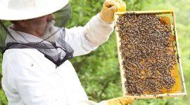USAID: Сельскохозяйственные предприниматели из сектора садоводства и пчеловодства испытывают дефицит квалифицированной рабочей силы