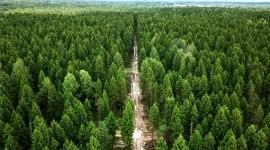 О необходимости защиты лесов от вредителей