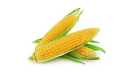 Прогноз урожайности кукурузы и пшеницы в ЕС понижен из-за засухи