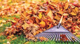 Transformarea frunzelor uscate în compost, un îngrășământul organic valoros pentru cultura de legume dar nu arse