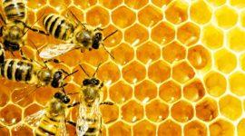 Eвропарламент настаивает на увеличении инвестиций в защиту пчел