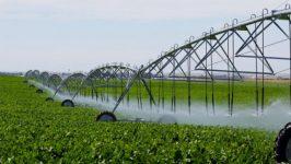 На каких условиях молдавские сельхозпроизводители смогут получить гранты?