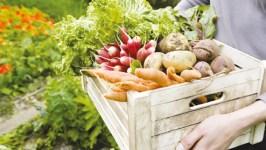 Хранение экологической продукции