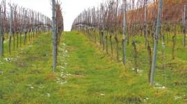 Информация о ходе перезимовки озимых культур, садов и виноградников на территории Республики Молдова по состоянию на 18 февраля 2020 г.